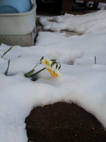 20140209_Snow_Suisen.jpg